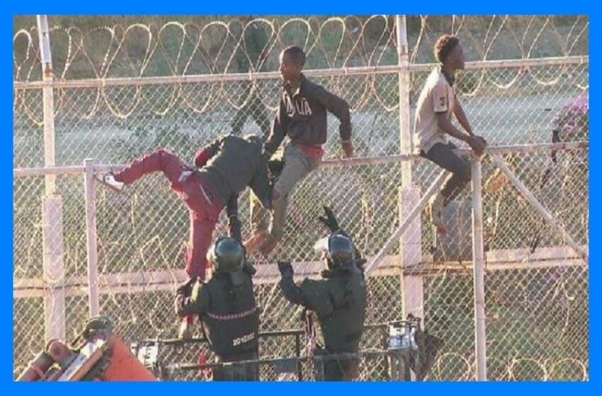 Only 4% of migrants on Greek border are Syrians, large number are Muslims from North Africa, not war refugees